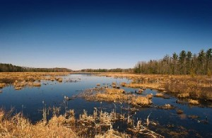 Wetlands in Michigan. Photo by David Kenyon of the Michigan Department of Natural Resources.